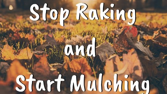 Stop Raking Leaves and Start Mulching Them!