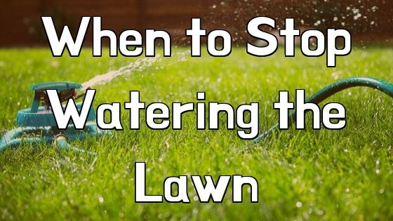 When to Stop Watering the Lawn
